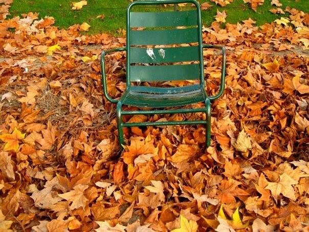 Cadeiras sobre folhas caídas