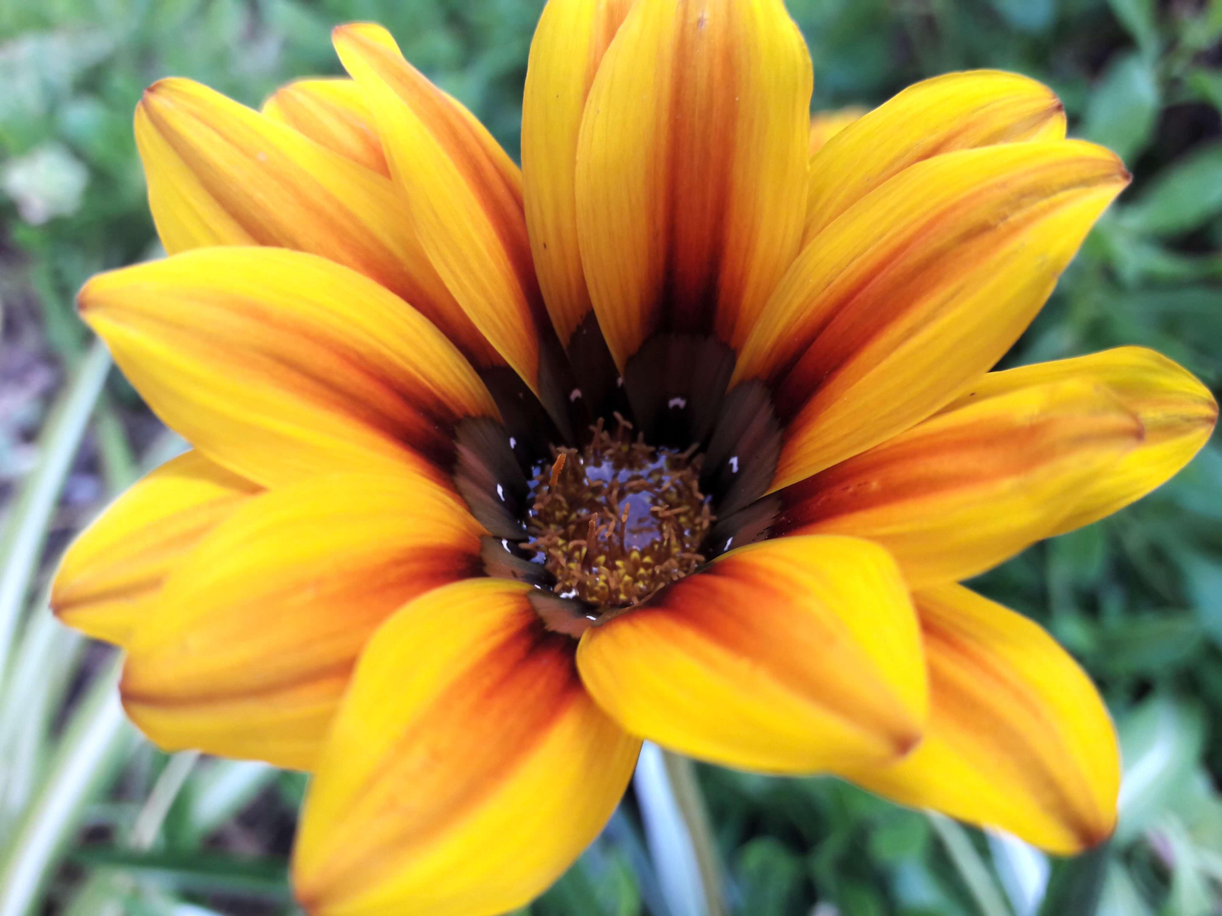dia dos amigos colorido, porque os amigos são flores