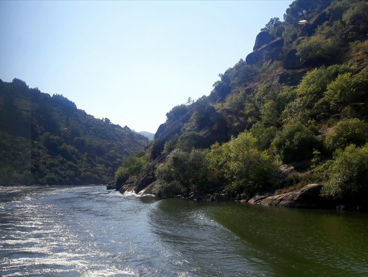 A vida é um rio