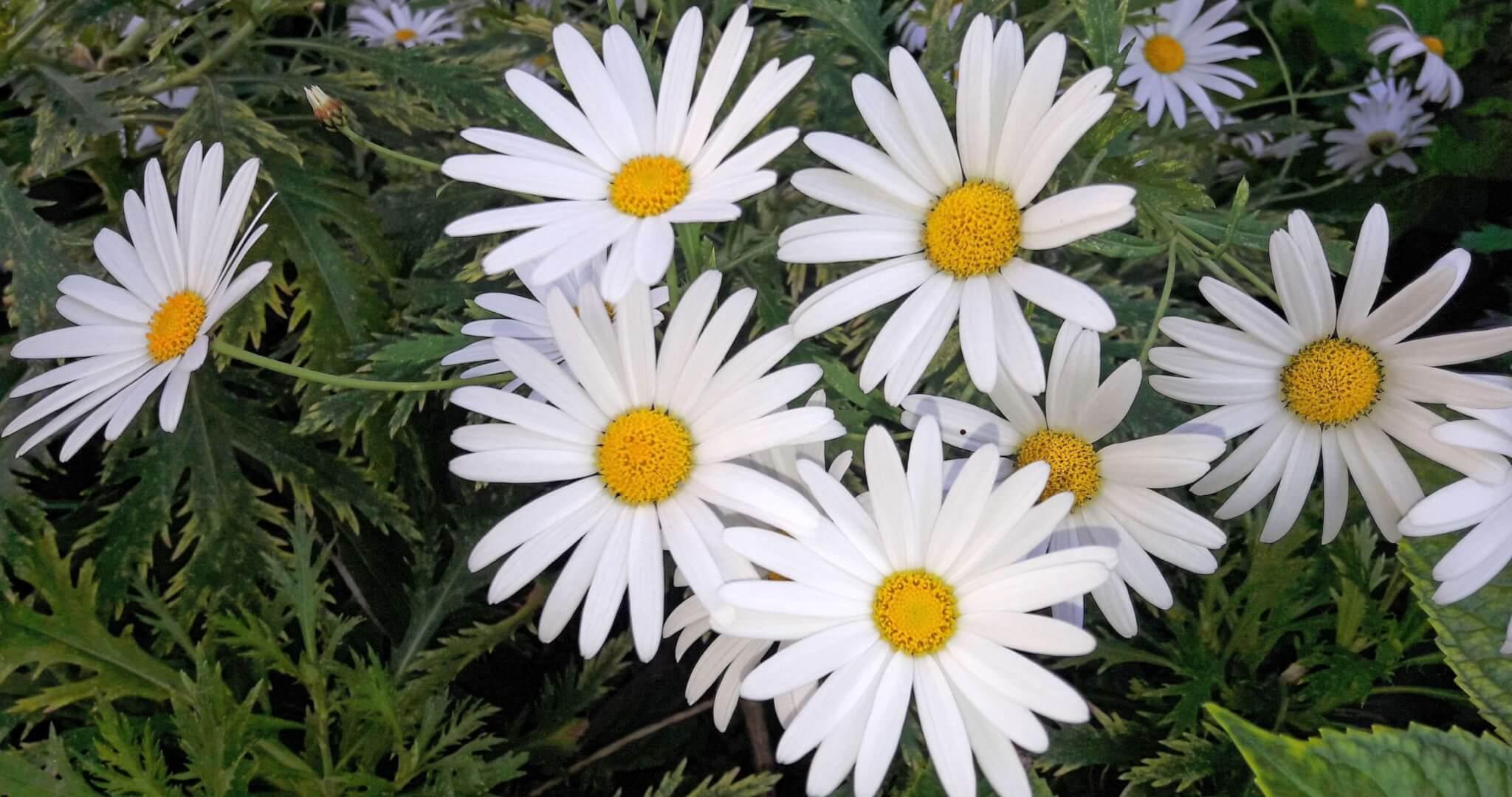 Pensar uma flor é vê-la e cheirá-la, O Guardador