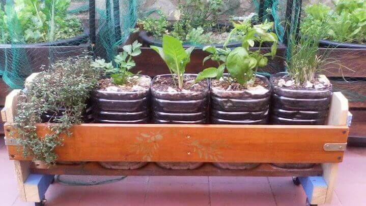 Cultive as suas ervas aromáticas