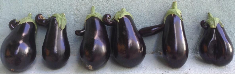 Fruta Feia - Beringelas muito originais