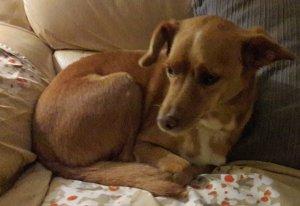 """Vítor Encarnação: """"os meus chinelos de quarto têm dois cães bordados a sorrir"""""""