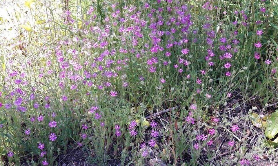 Flores campestres, o conselho para um jardim reservado