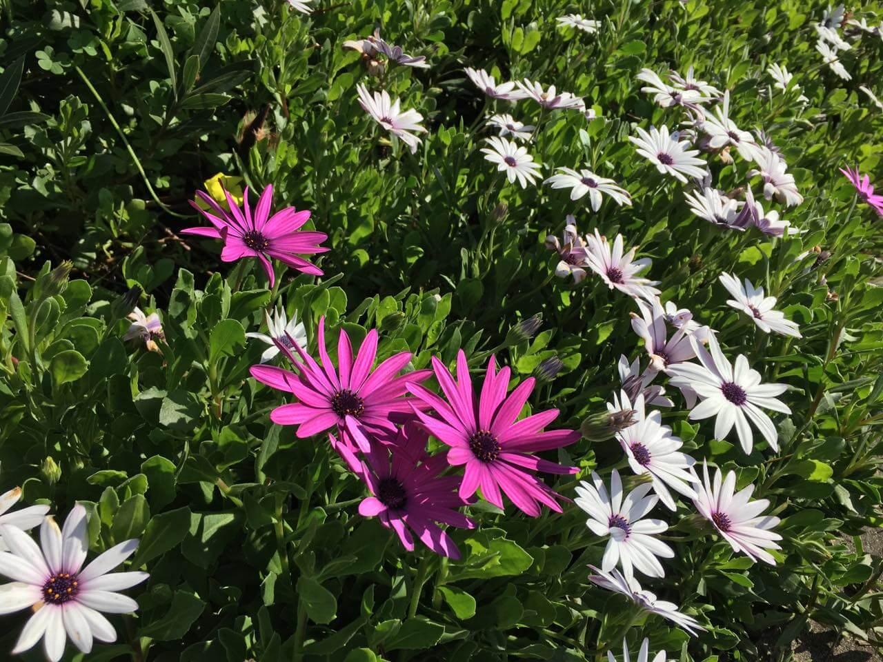 flores de primavera -O que fazem já aqui ervas temporonas e flores imaturas