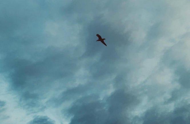 Pássaro no céu