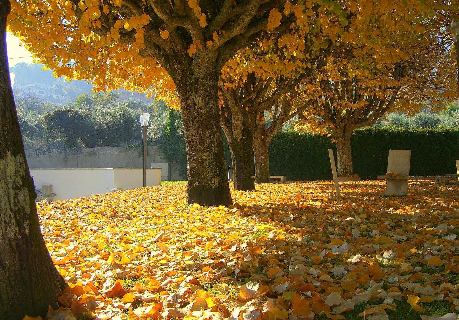 Cores de outono, fotografia de Bruno César