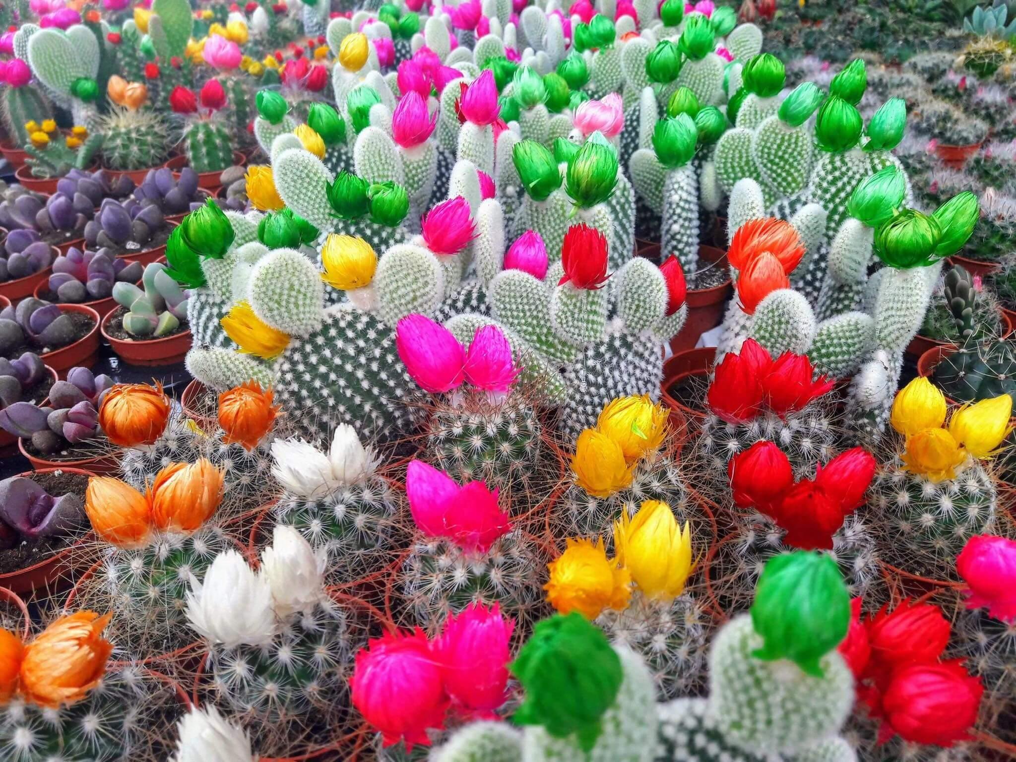 A vida, os espinhos e as flores