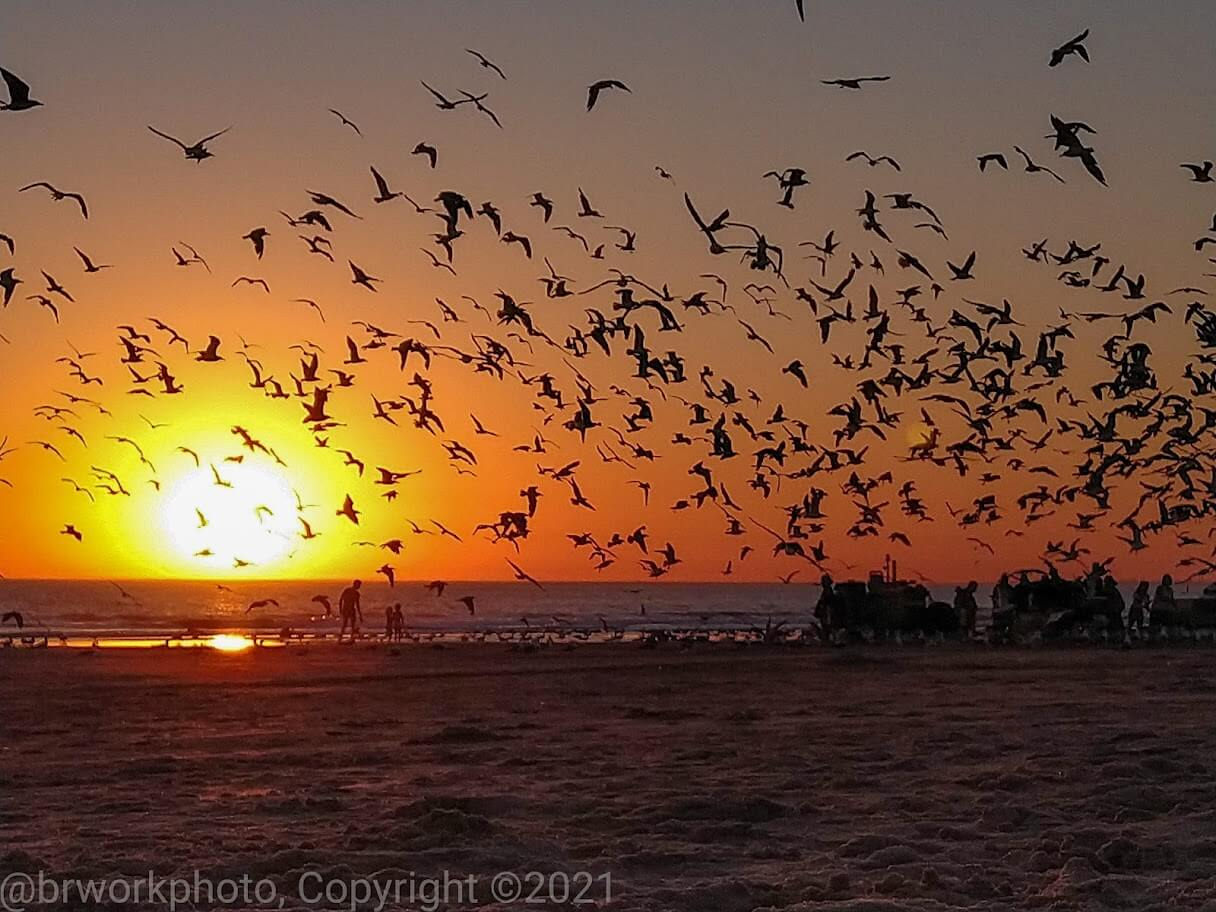 Gaivotas na praia ao pôr do sol