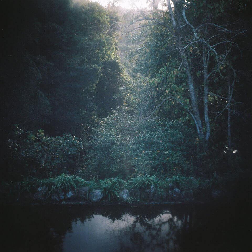 Salvar a beleza e salvar a floresta